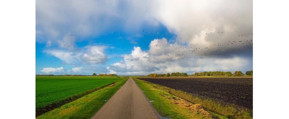 Almere: een duurzame, groene en gezonde stad